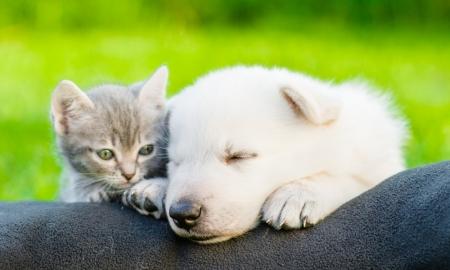 Pups en kittens